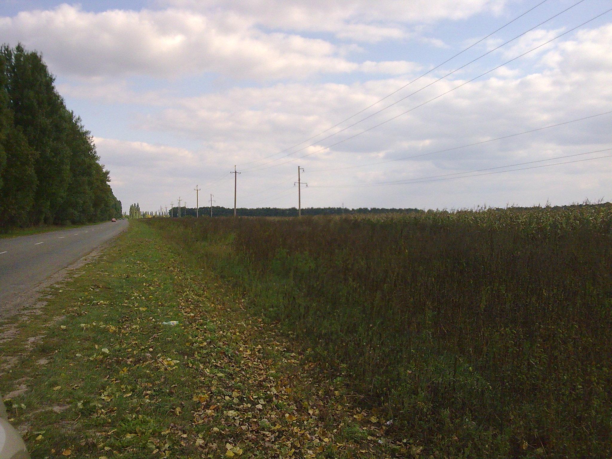 Продается земельный участок в Васильковском районе 6